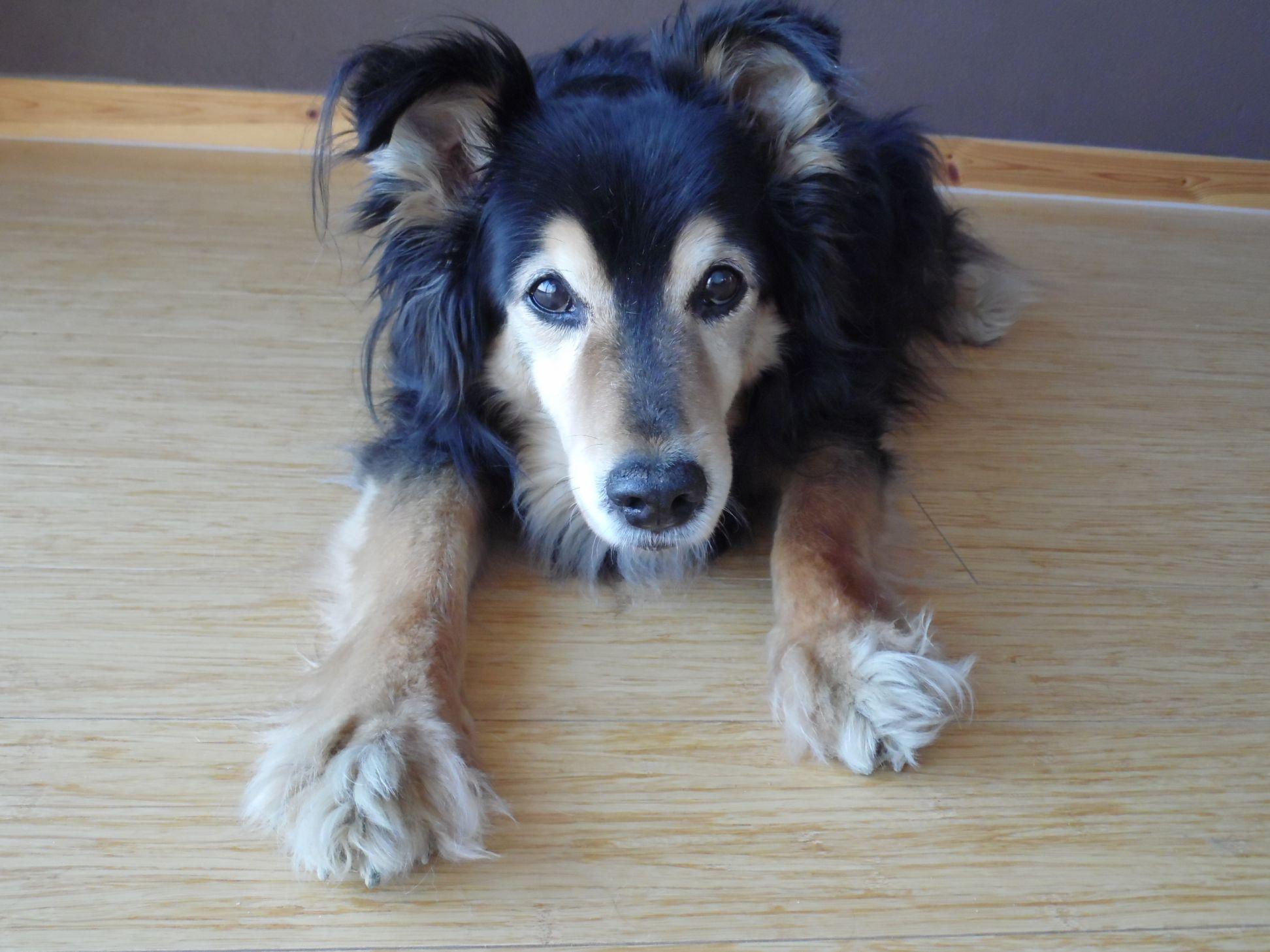 Photo of Gucio - doggy detective/taken by Marta Matyszczak